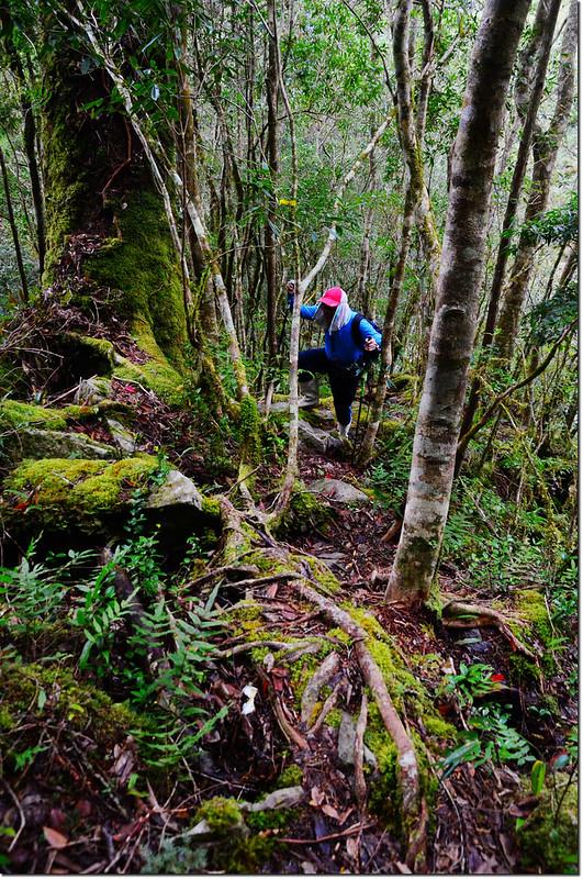 巨木群登山步道 1