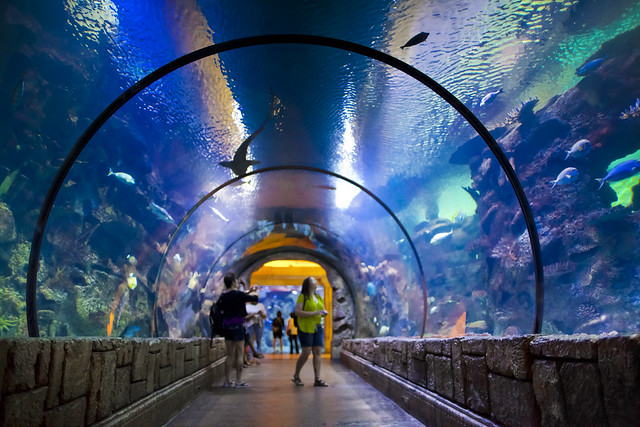 Mandalay bay shark reef coupon code