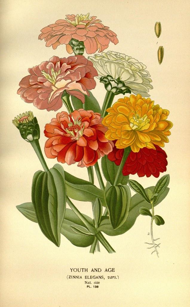 Vintage Floral Print Bed Sheetsbed Bath Beyond Forest Park Il