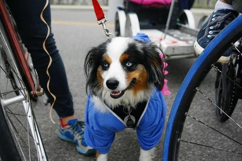 Dog Ciclovia