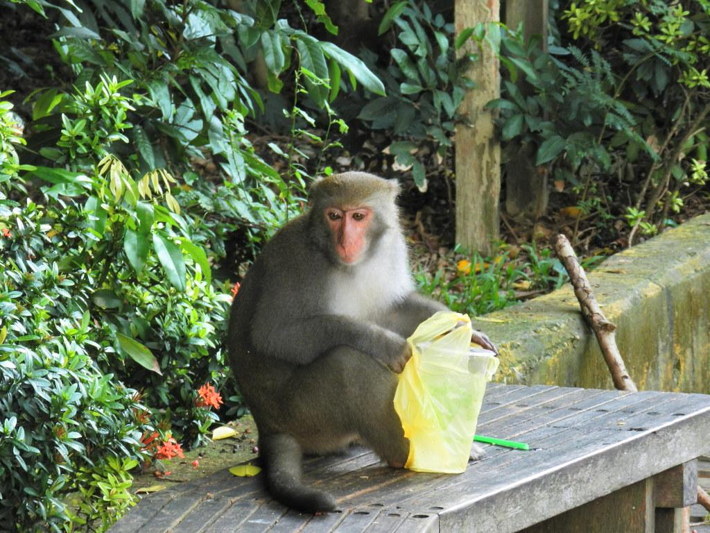 圖片來源:壽山國家自然公園管理處