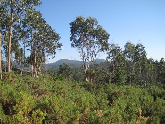 Vistas hacia Lampai y el Monte Meda en la ruta del Castro Lupario y río Sar