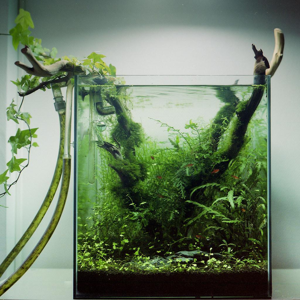 nano jungle my aquascaping 60l fish tank plants rotala flickr. Black Bedroom Furniture Sets. Home Design Ideas