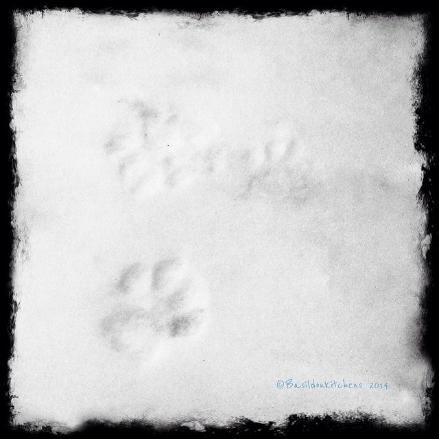 19/2/2014 - feet {I wonder whose feet left these foot-prints in the snow; we don't have a pet!} #fmsphotoaday #feet #footprints #winter #snow