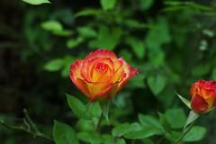 fleur 2
