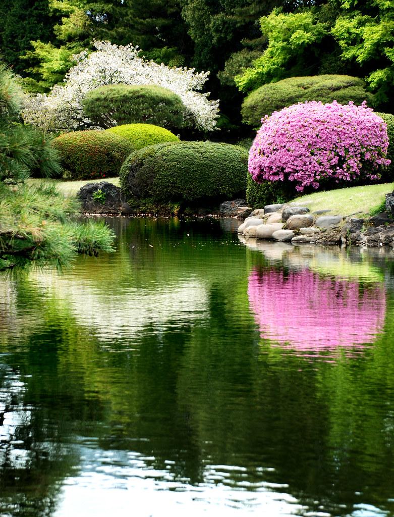 Japanese Garden Tranquility | A tranquil Japanese garden