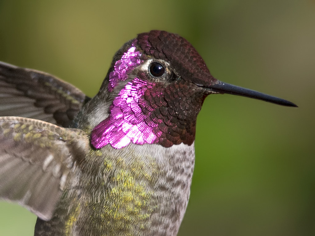 hummingbirds and flowers