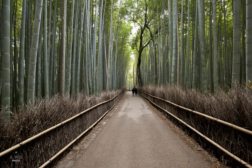 Walking down the Bamboo Grove