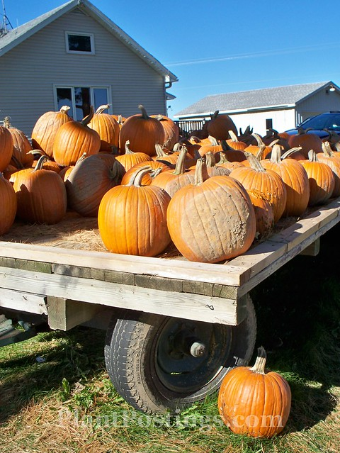 oakwood pumpkins