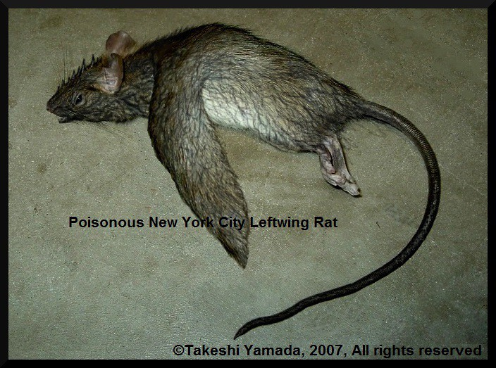 Rat Island New York