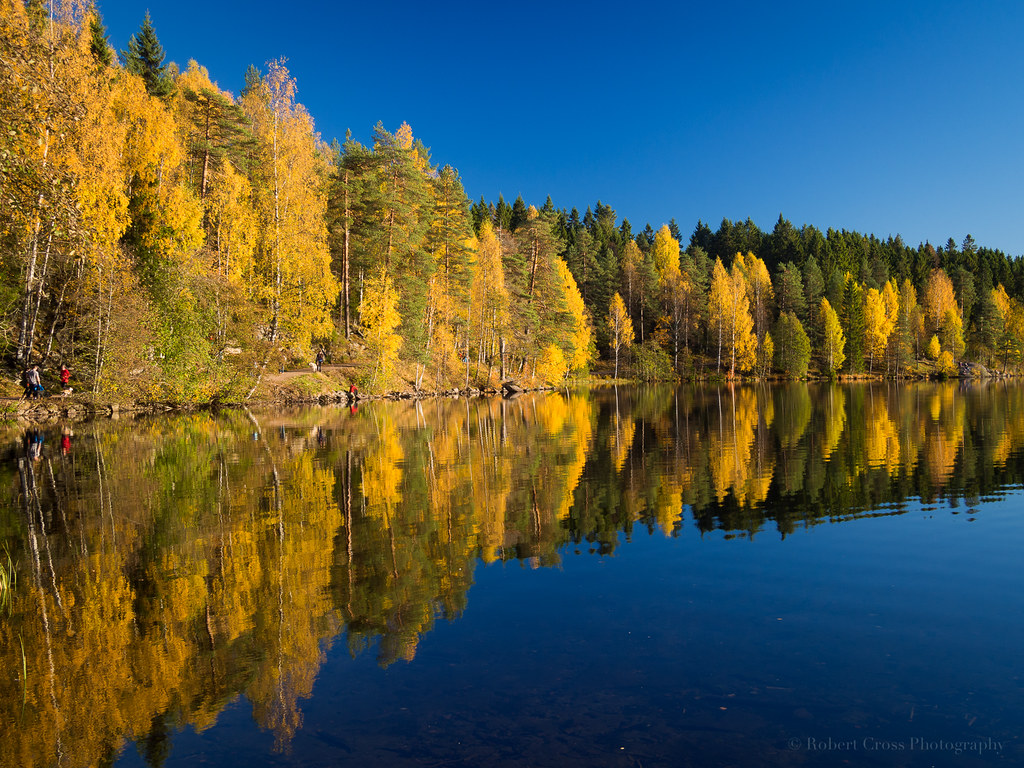 Image result for Reflections of Autumn