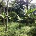 Proyecto, Gestion de Tierras y Bosques