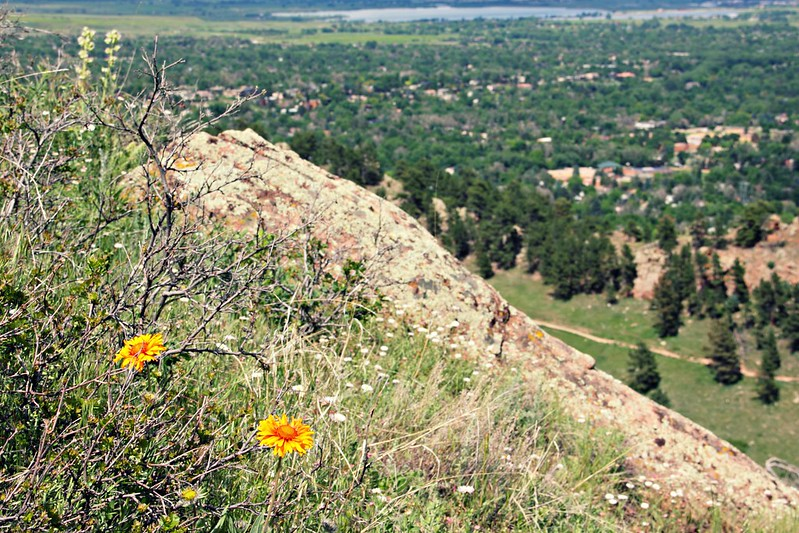 Flowers on Mount Sanitas, Boulder