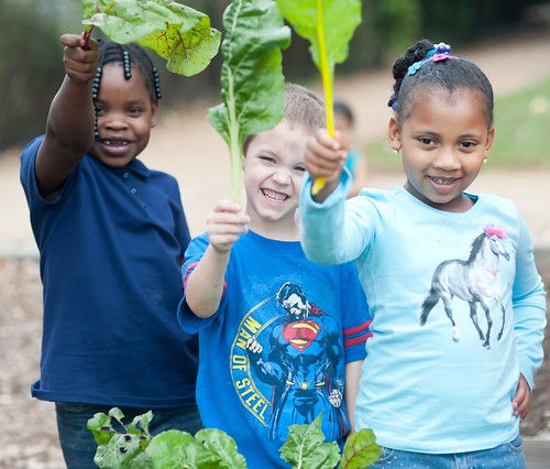 Elementary school students holding Swiss chard