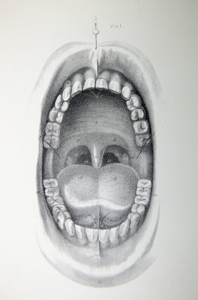 Pig mouth anatomy