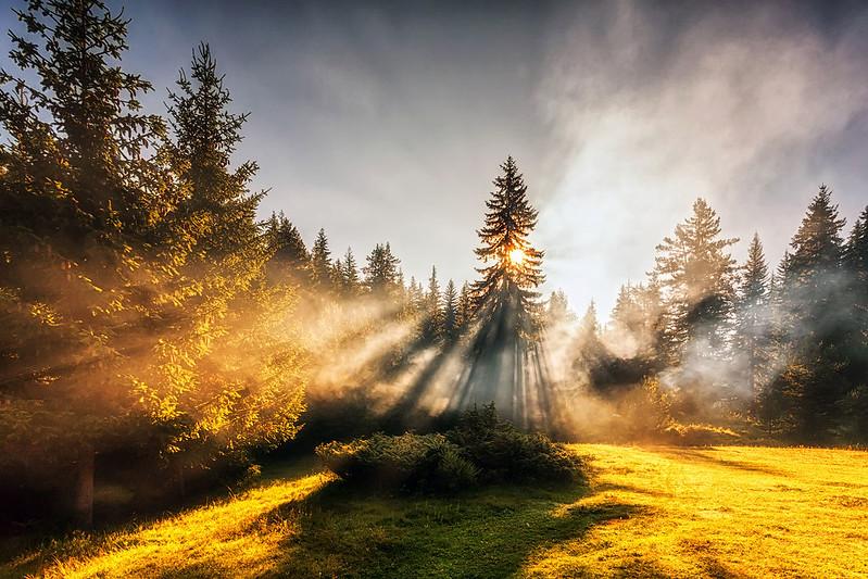 Divine Sunbeams