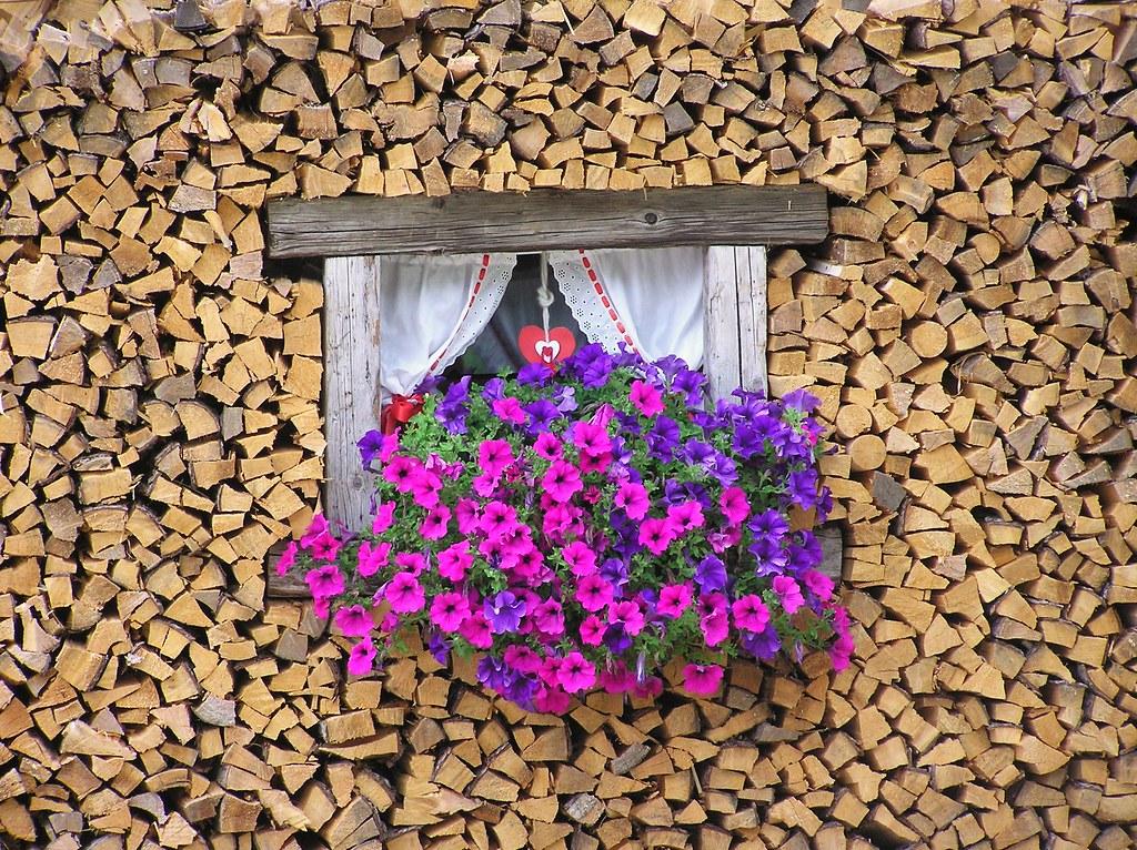 La finestra con i fiori nel legno the window with flower for Finestra con fiori disegno