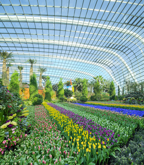 Gardens by the Bay 新加坡濱海灣花園