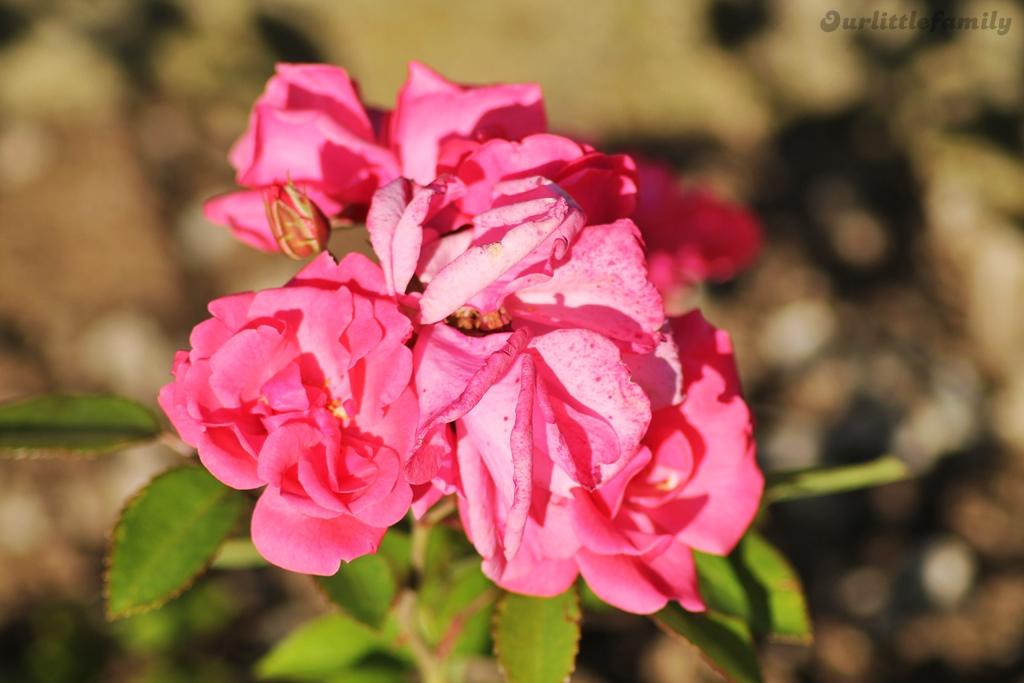 mon jardin 11