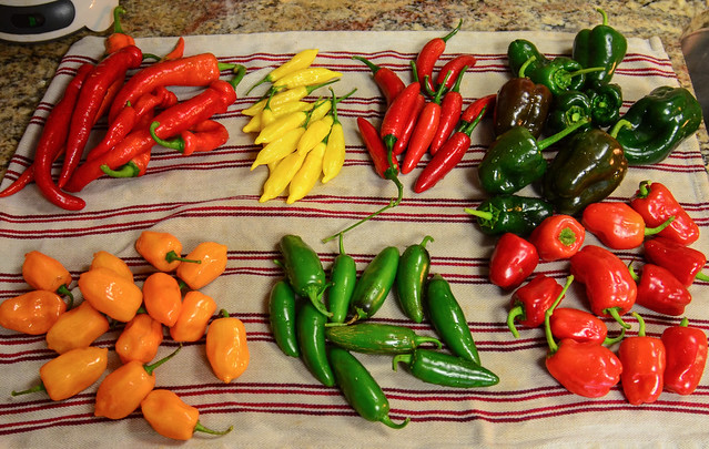 Hot peppers names clockwise from bottom left are habaneros, hot Portugal, hot lemon, serrano, poblano, cajun bell and  jalapeno.