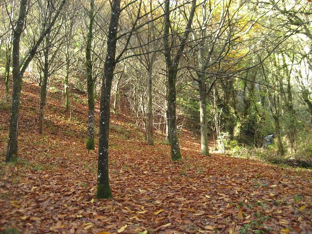 Bosque en el Sendeiro da Fervenza de Férveza