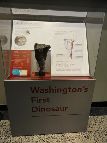 Image shows a plexiglass case on top of a gray stand emblazoned with Washington's First Dinosaur. The fossil looks a bit like a dark bony funnel. An informational sign shows its age and some details about it. You can find that information in the linked article below.