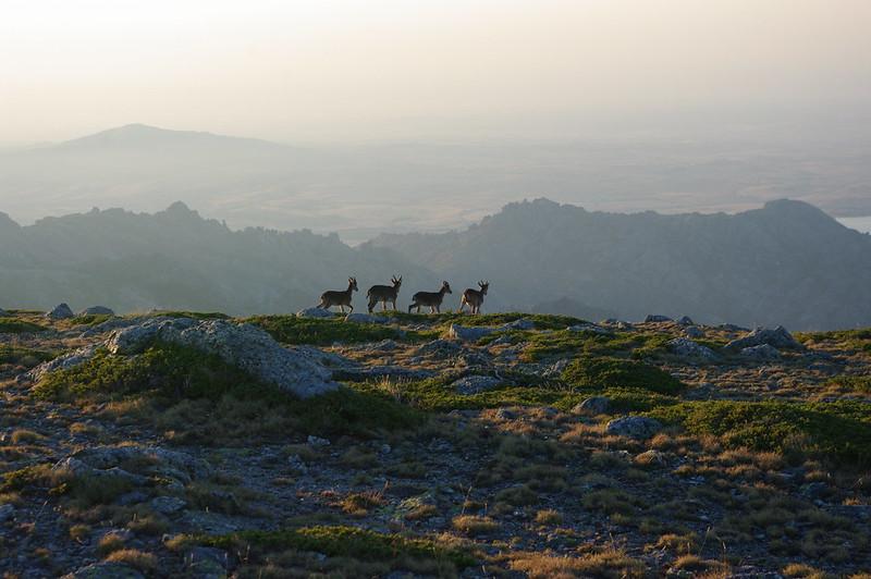 Cuerda Larga en la Sierra de Madrid (Agosto 2013)