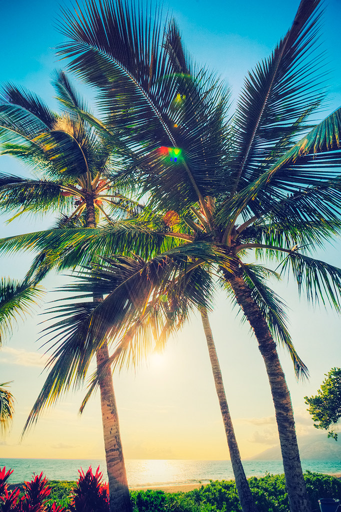Hawaii Palm Trees Hawaii Palm Trees Camera Canon 5d Locat Flickr