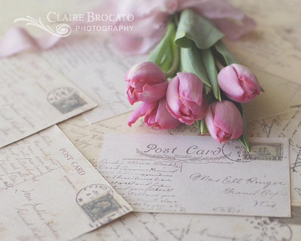 Tulips and vintage postcards | Tulips seems to be ... White Tulip Flower