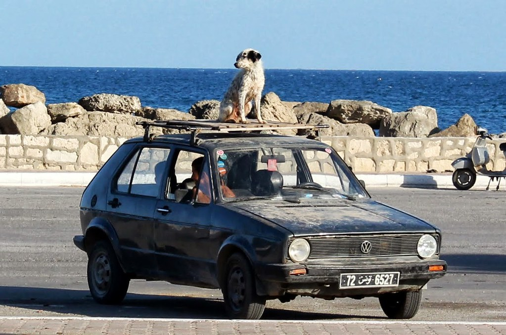 Dog On A Car Roof How Many Sets Of Teeth Do Dogs Get