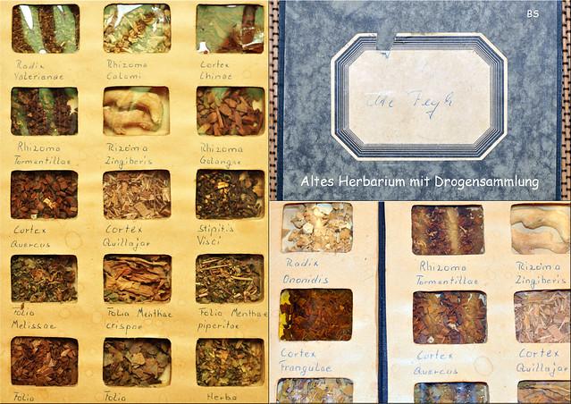 Botanik ... Herbarium / Drogensammlung ... Wurzeln, Rinden, Blättern - Radix, Rhizoma, Cortex, Folia ... Fotos und Collagen: Brigitte Stolle