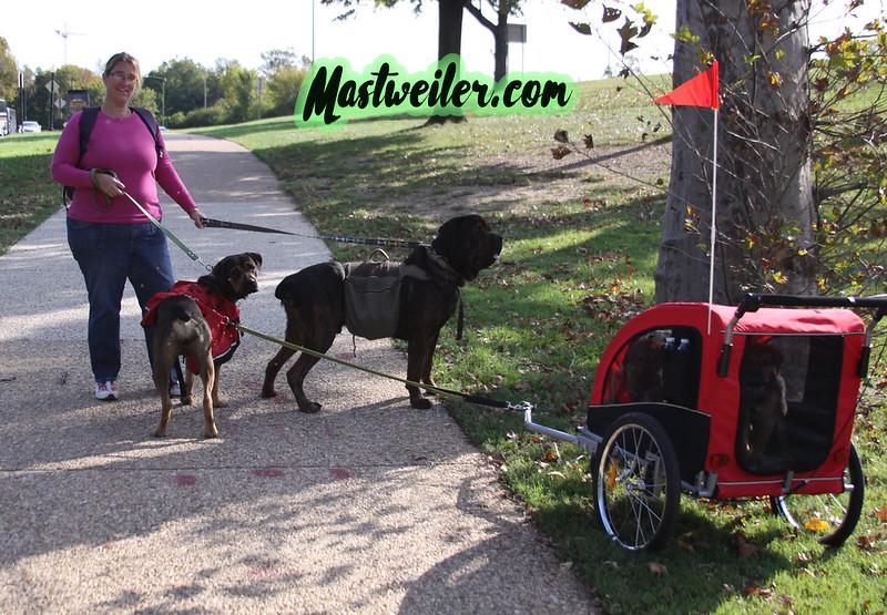 Mastweiler Visits DC!