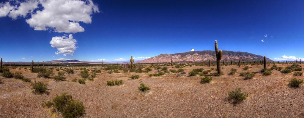 giant cactus landscape jujuy argentina | mariusz kluzniak ...