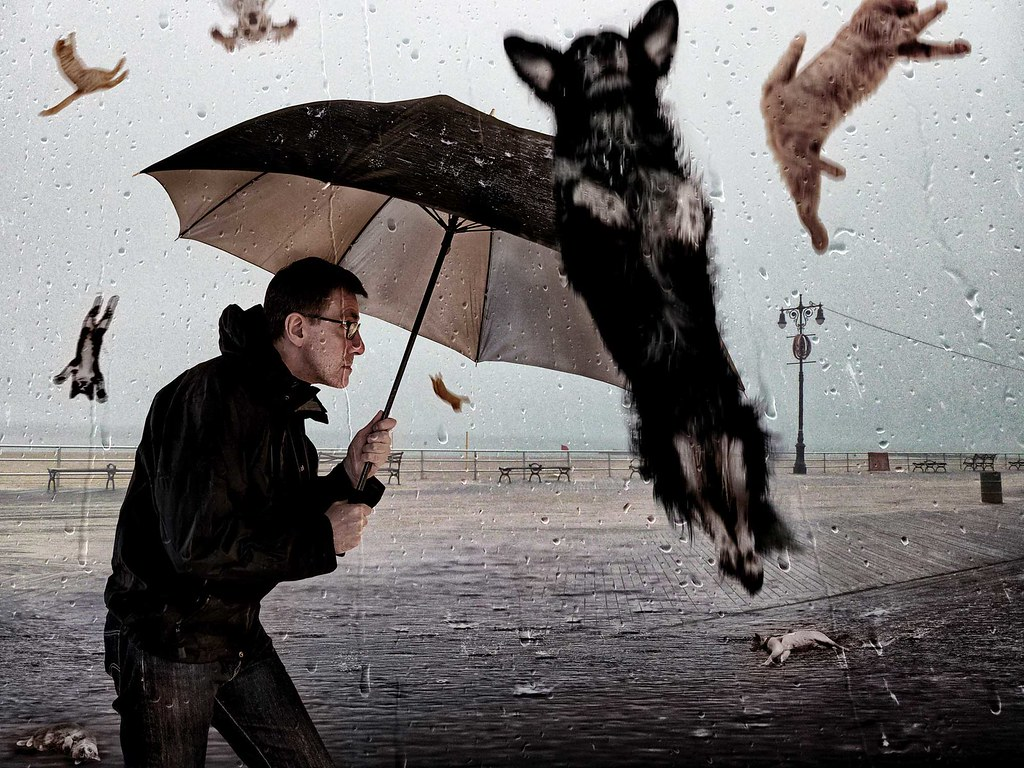 Raining Cats And Dogs Rescue