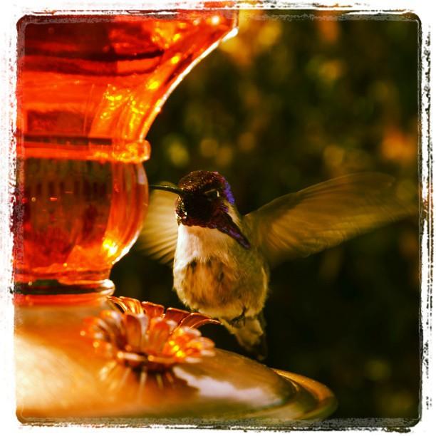 The photo ham strikes again. #all_shots #birds_of_instagra… | Flickr