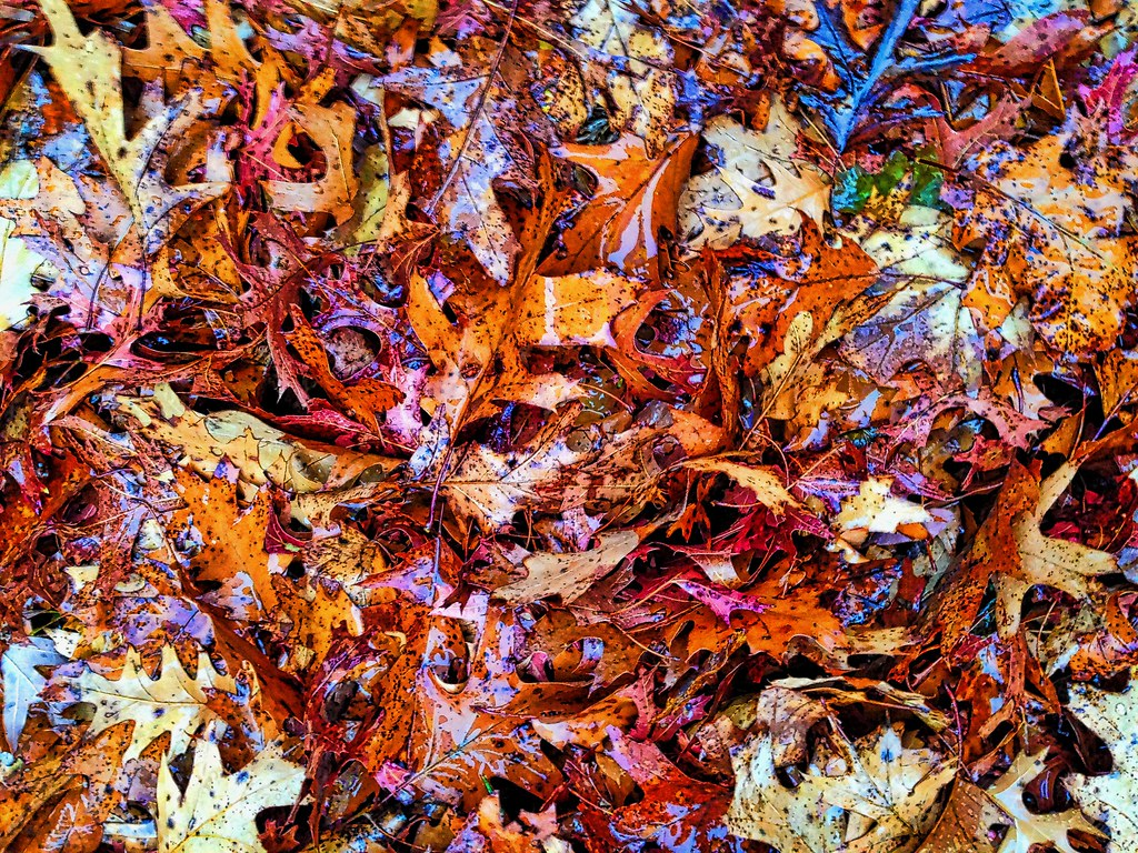 Jackson Pollock inspired | Abstract, Leaves, fall, autumn ...