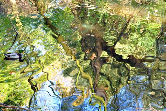 Wildpark Ludwigshafen-Rheingönheim, Oktober 2016. Der große Baum spiegelt sich im Weiher. Durch Wind- und Wasserbewegungen ändert sich das Bild ständig und zeigt immer wieder neue Strukturen, Muster, Farbspiele. Fast entstehen kleine Gemälde ...wunderschön! - Foto: Brigitte Stolle