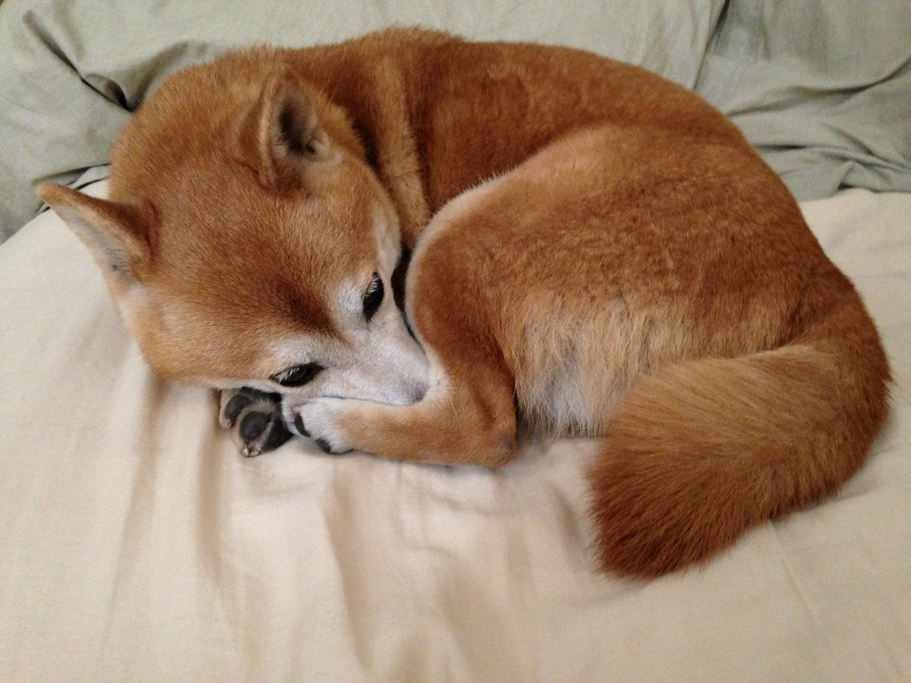 Foxes Cat Dogs