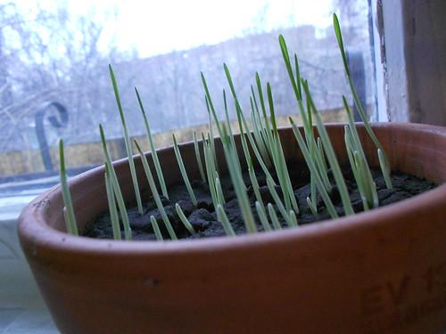 мусина трава красиво