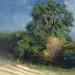 PA718 Hedgerow in Autumn. Oil on canvas 36 x 31 cm Neil Bolton Fine Art Painter