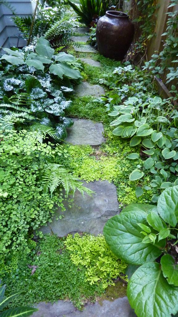 Portland oregon garden tour darcy daniels 39 garden flickr for Paysagement exterieur photo