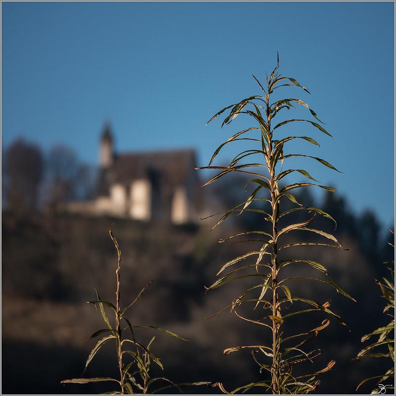 Bords de l'Yonne 31439360165_5f873b206c_c