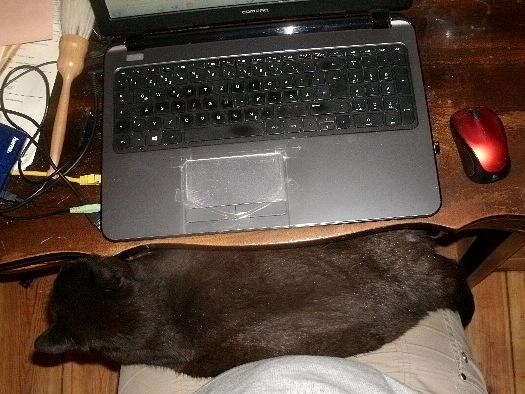 Katze bei der Arbeit
