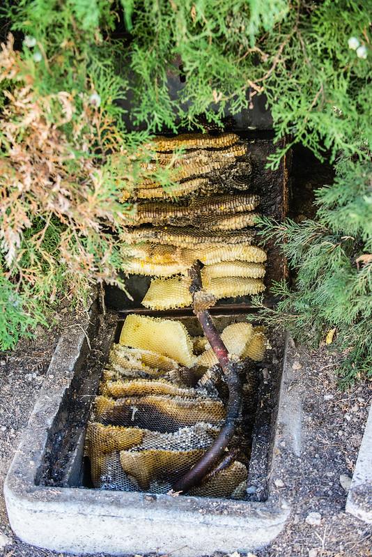 Beehive in a Water Meter