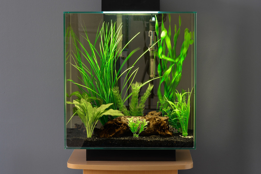 how to clean a fluval edge fish tank