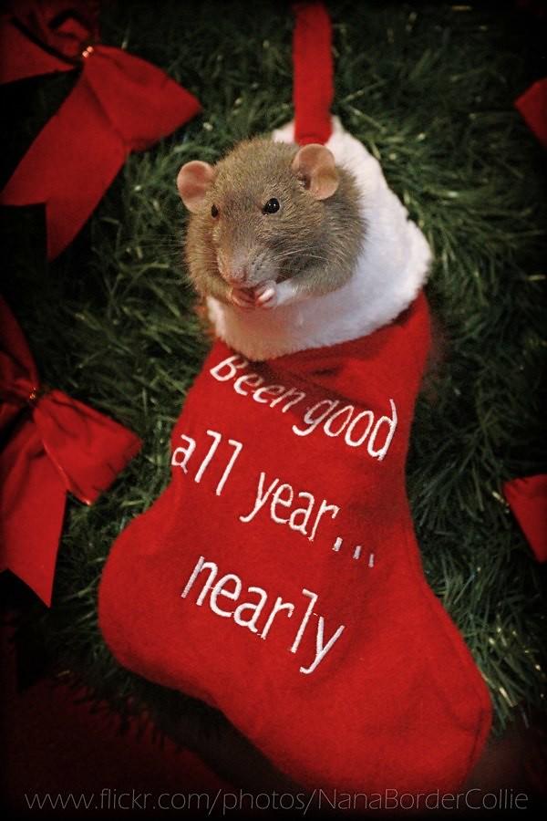 Christmas Gift For 6 Year Old Girl