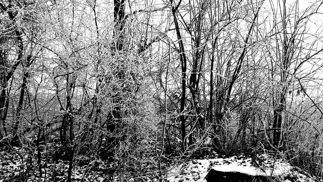 Cold day in Feldbrunnen