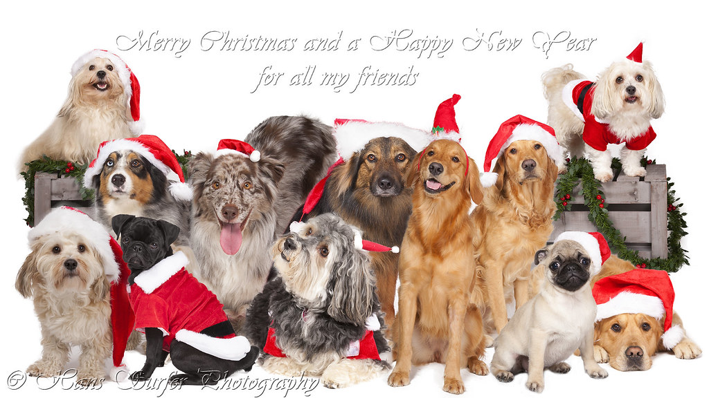 Merry Christmas and Happy New Year ..12 dogs (one for ever ...