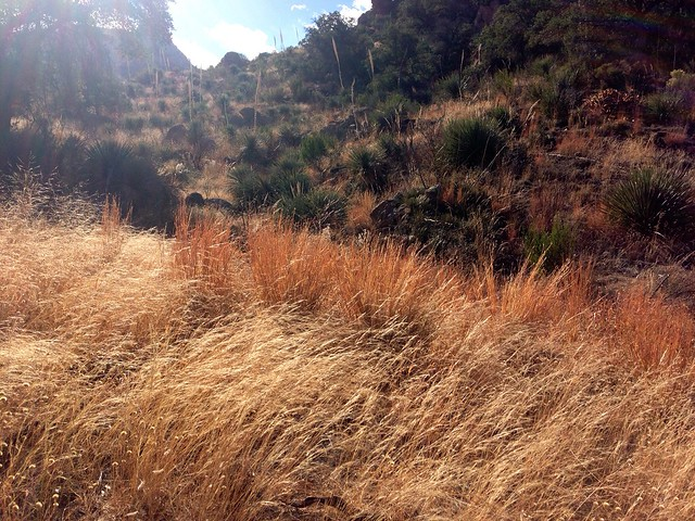 desert grass we had a wonderful hike today in catalina. Black Bedroom Furniture Sets. Home Design Ideas