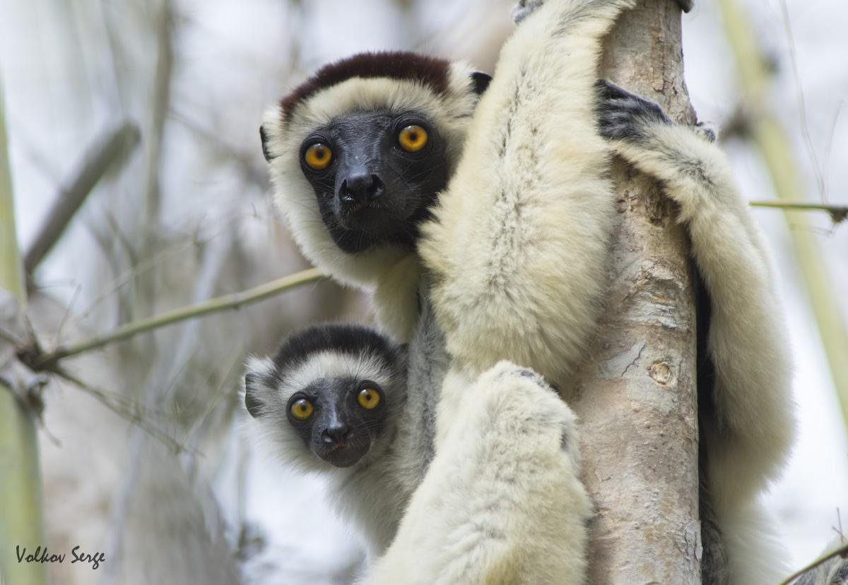 Дикий Мадагаскар